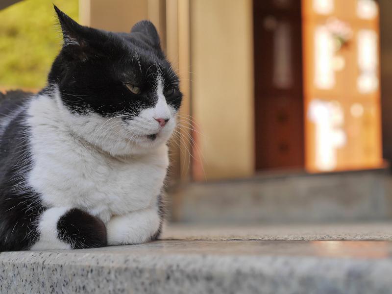 タイルの上で香箱の黒白猫2