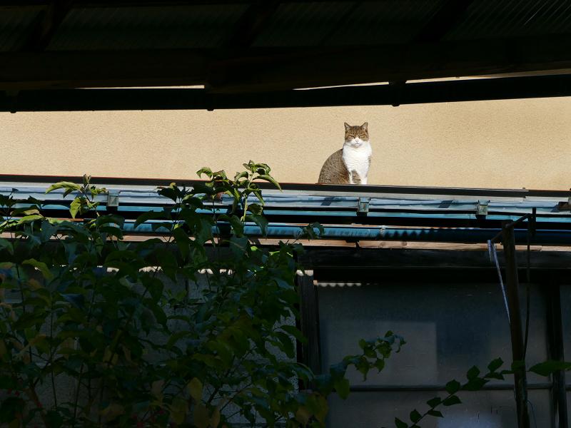 遠くの屋根の猫1