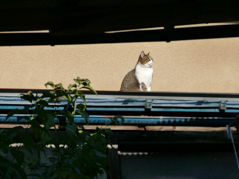 遠くの屋根の猫2