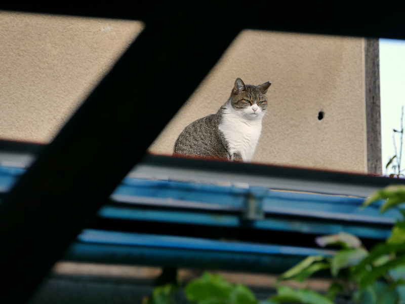 遠くの屋根の猫3