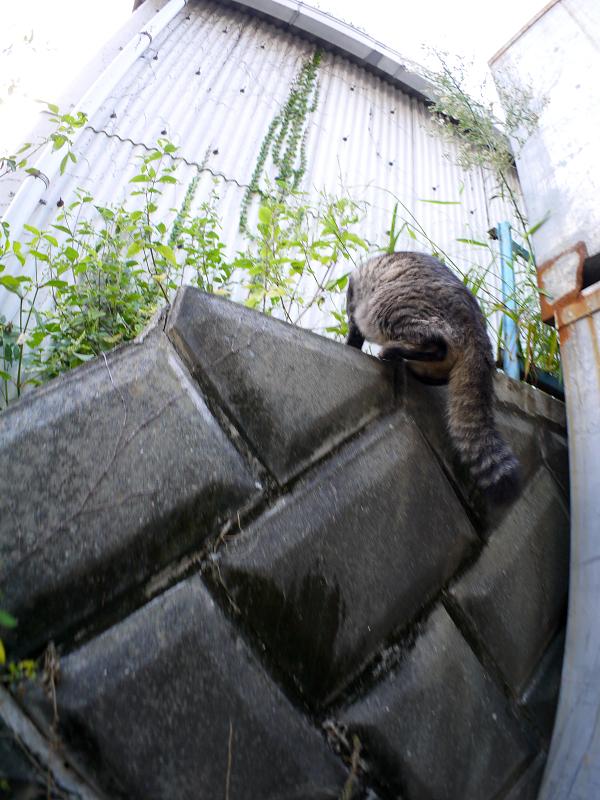電柱の横に座ってるキジトラ猫4