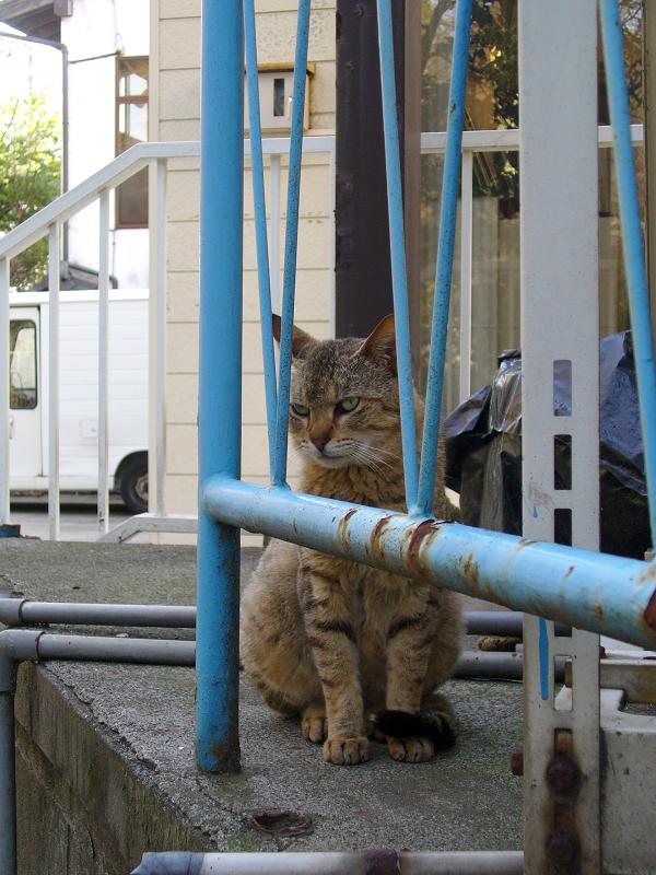 登場したキジトラ猫2