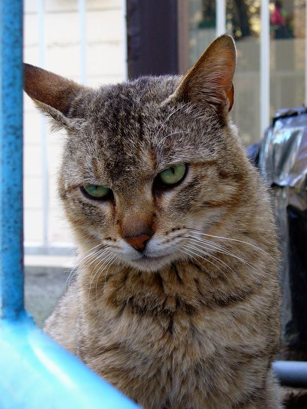 登場したキジトラ猫3