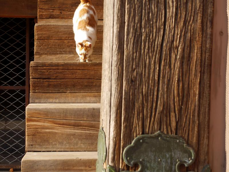 階段の端を降りてくる茶白猫2