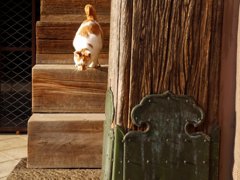 階段の端を降りてくる茶白猫3