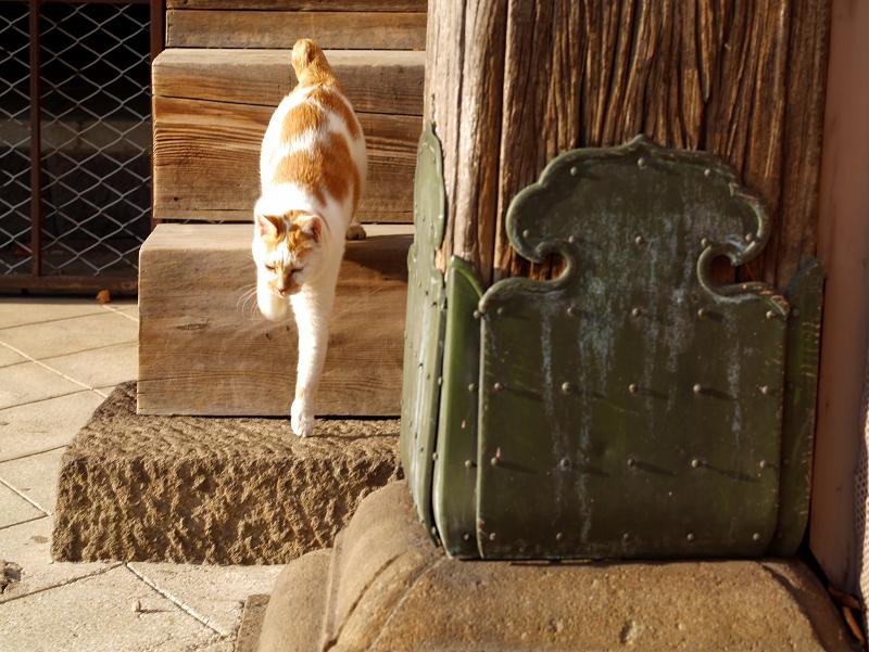 階段の端を降りてくる茶白猫4