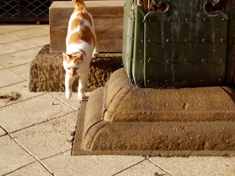 階段の端を降りてくる茶白猫5