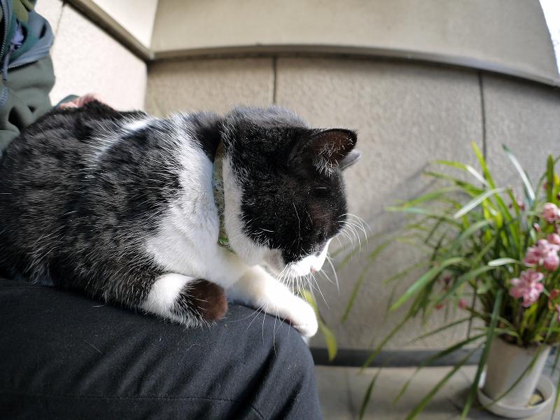 やっと膝に乗った黒白猫2