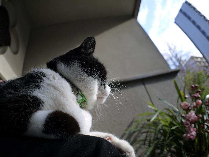 やっと膝に乗った黒白猫3