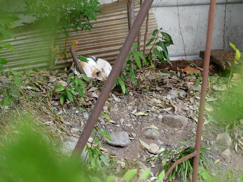隅っこで寝ている三毛猫1