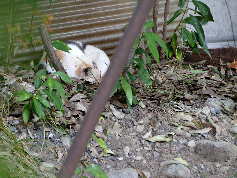 隅っこで寝ている三毛猫2