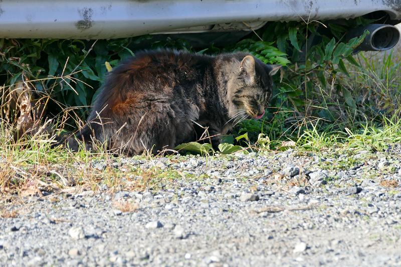 車の下の毛長の黒猫2