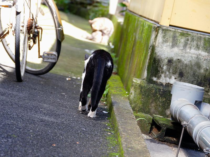 歩み寄って行く白黒猫1