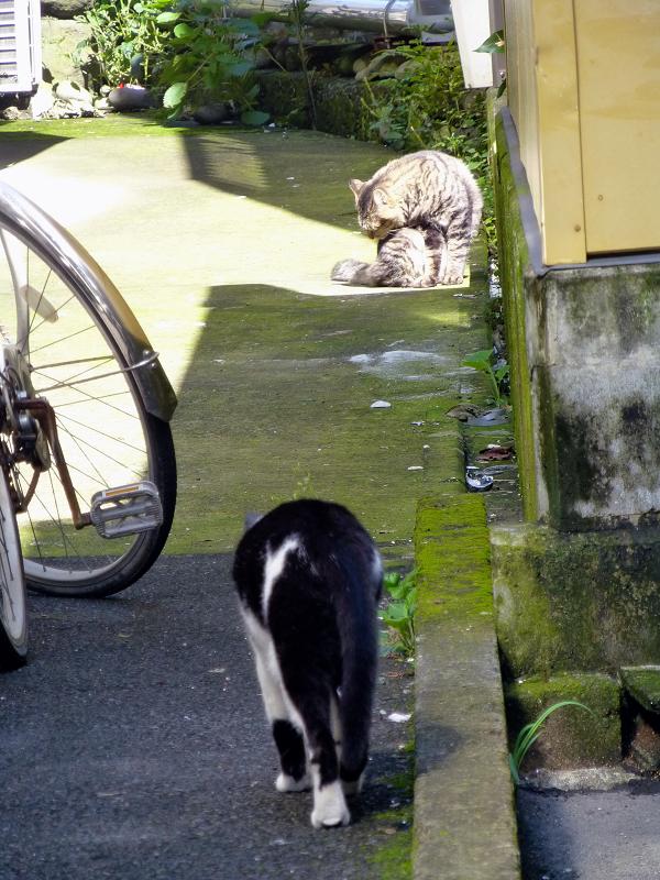 歩み寄って行く白黒猫2