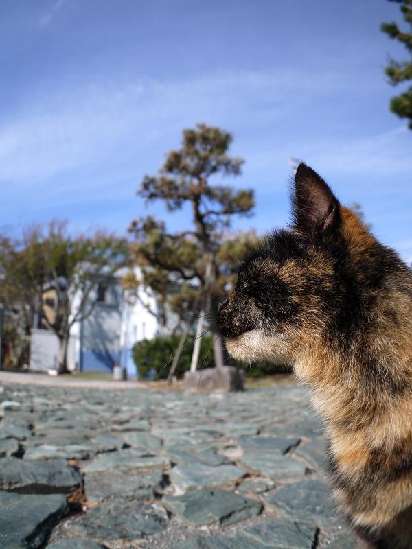 公園でアクビをするサビ柄猫3