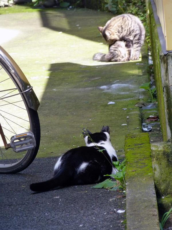 歩み寄って行く白黒猫3