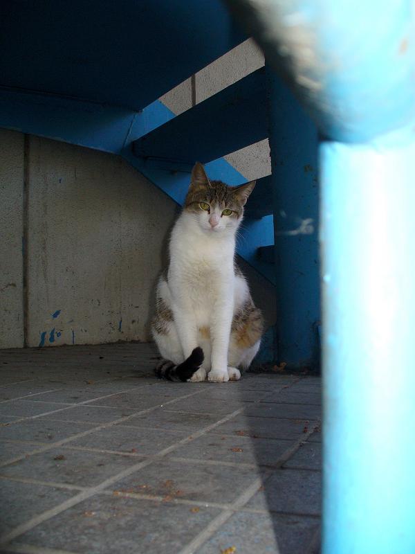 カーブを描くキジ白猫のフォルム1