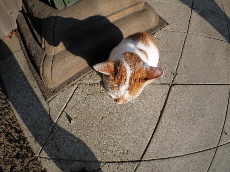 足元で眩しい茶白猫1