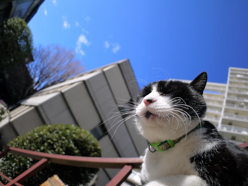 青空の下膝乗り黒白猫1