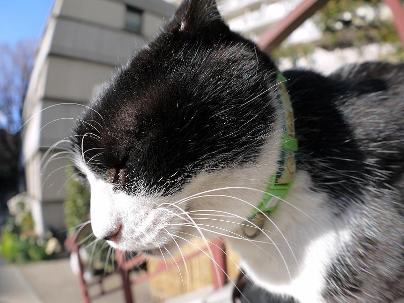 青空の下膝乗り黒白猫3