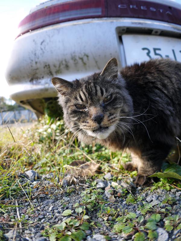 車の下から寄って来た毛長の黒猫1