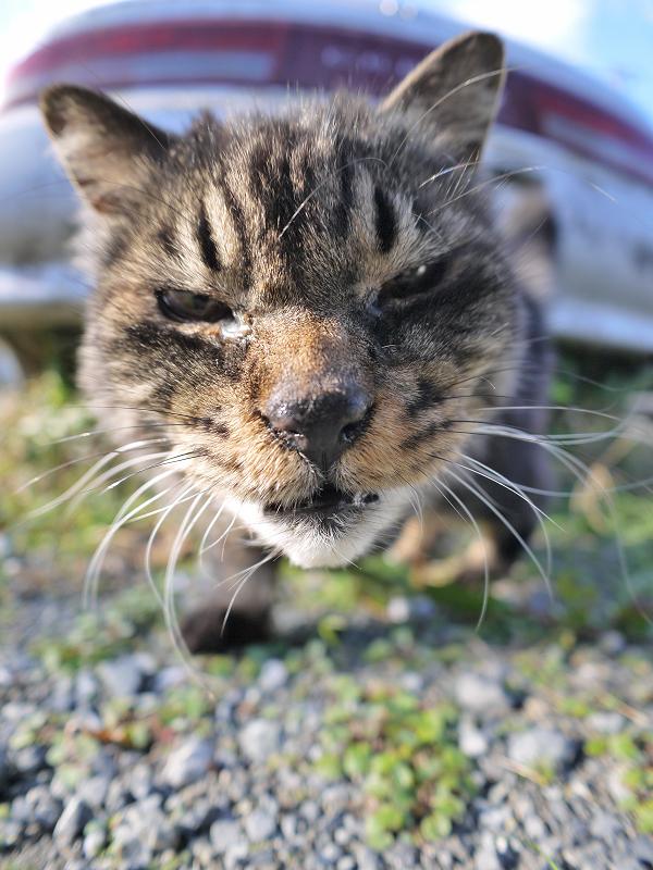 車の下から寄って来た毛長の黒猫2