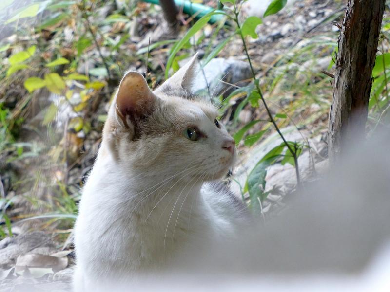 隙間から写した三毛猫2