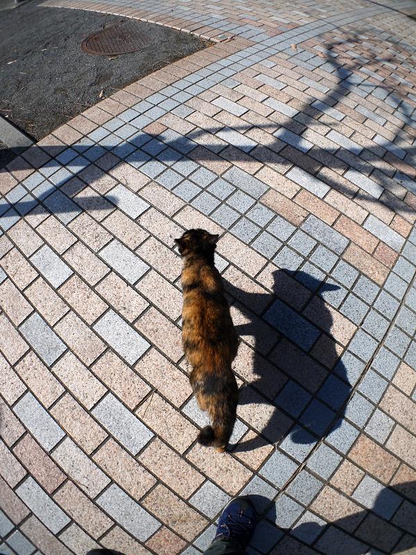 タイルの上を歩くサビ柄猫1