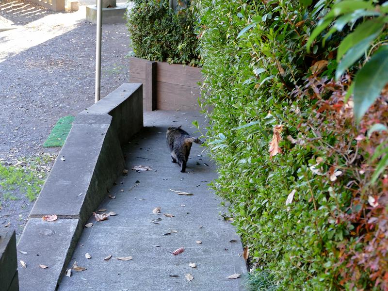 スロープを走り降りるキジトラ猫1
