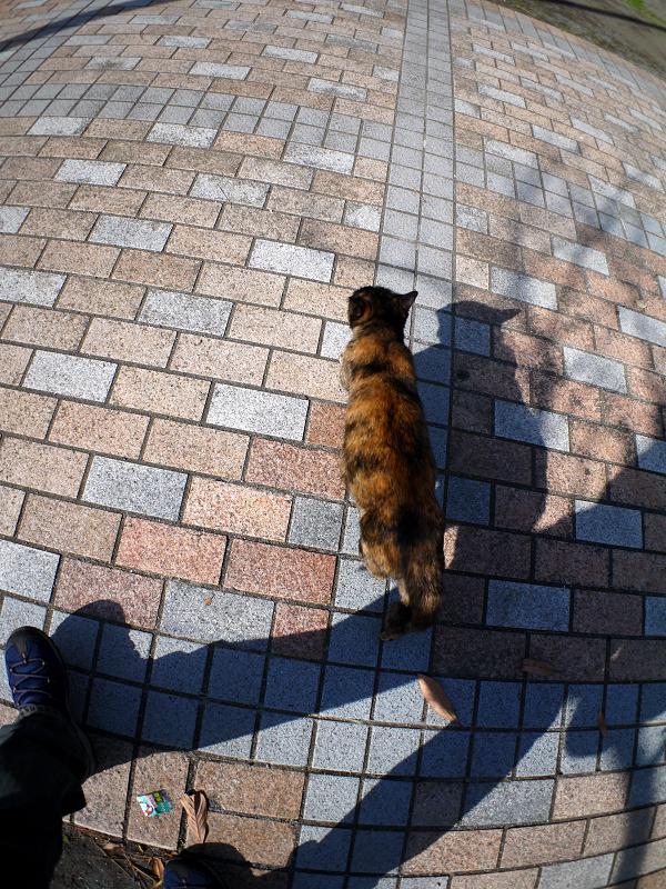 タイルの上を歩くサビ柄猫2