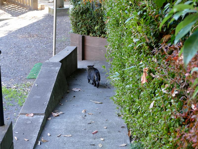 スロープを走り降りるキジトラ猫2