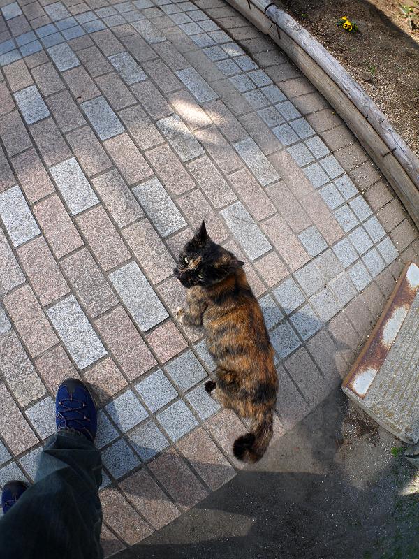 タイルの上を歩くサビ柄猫3