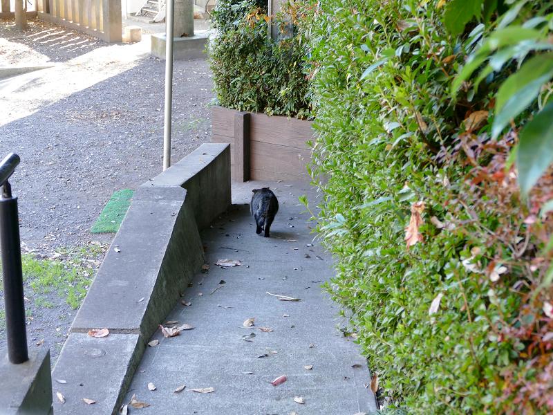 スロープを走り降りるキジトラ猫3