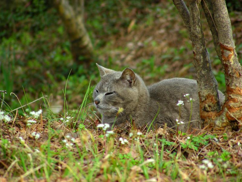 草原とグレー猫1