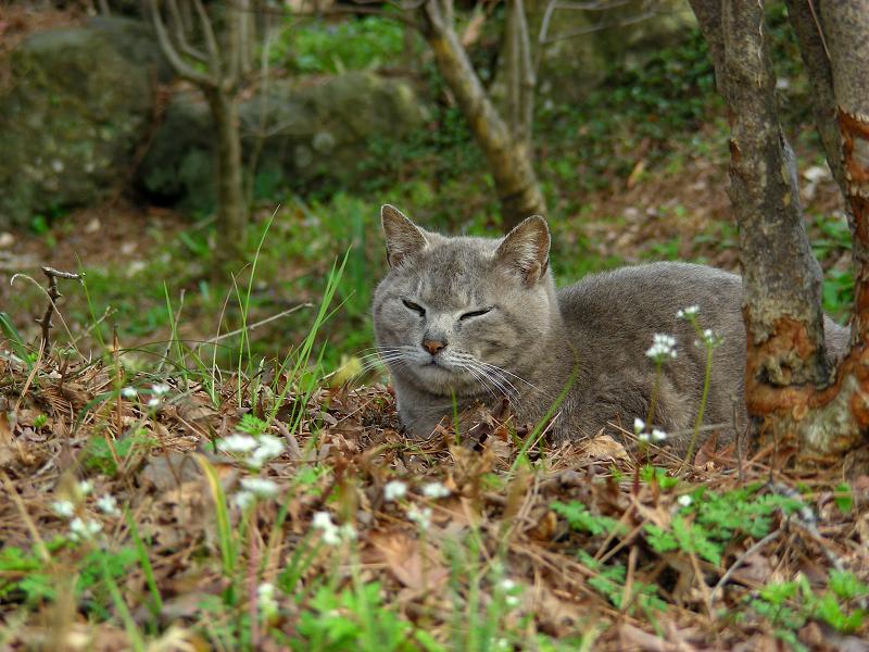 草原とグレー猫2