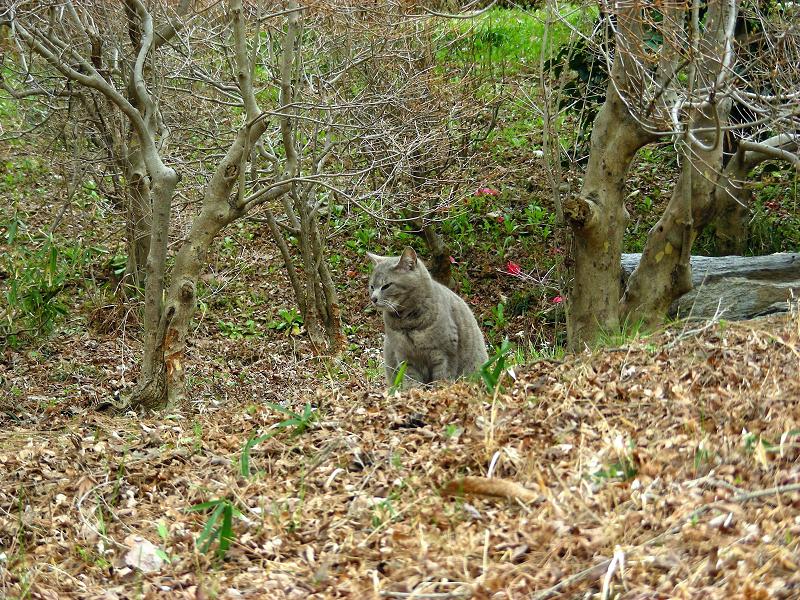 山奥のグレー猫2
