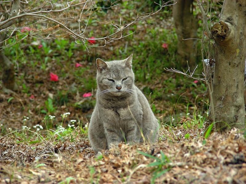 山奥のグレー猫3