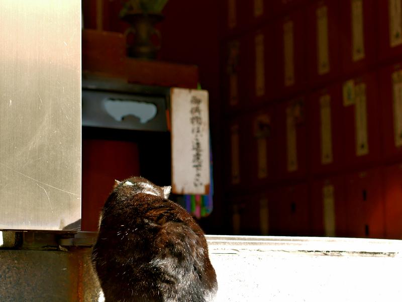 お堂の入り口の黒白猫1