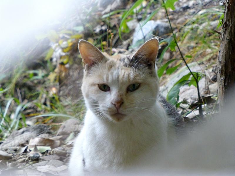 ブロック隙間の三毛猫1