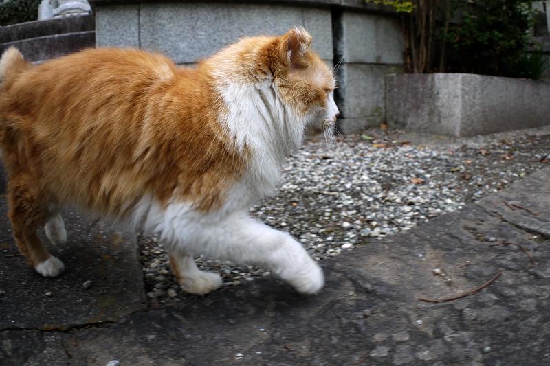 足元に来た毛長の茶白猫2