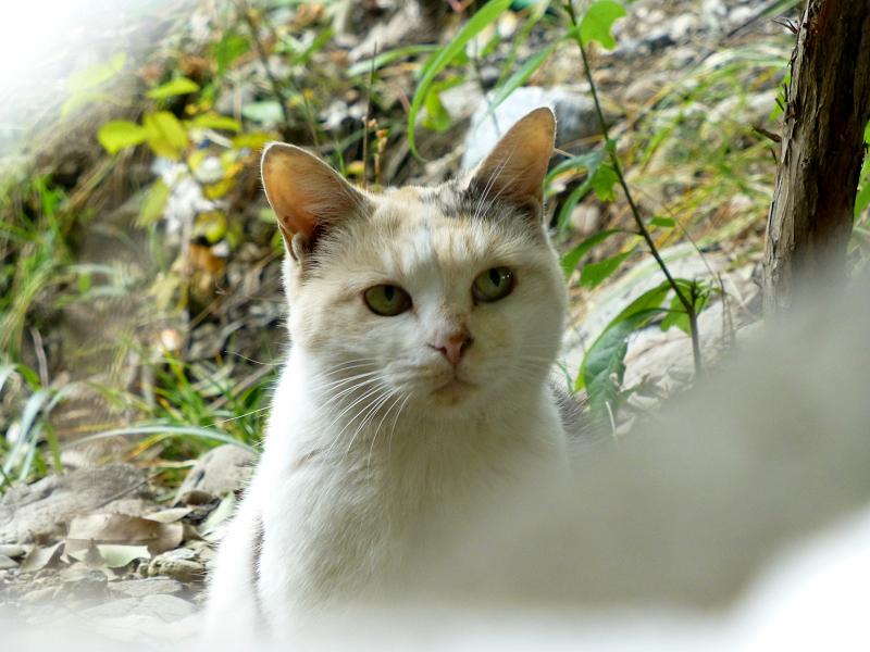 ブロック隙間の三毛猫2