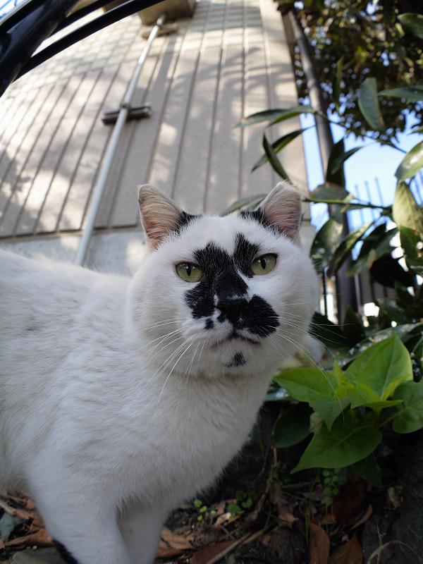 ユニーク柄の白黒猫1