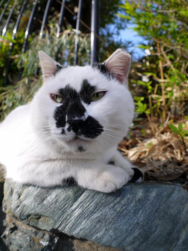 ユニーク柄の白黒猫2