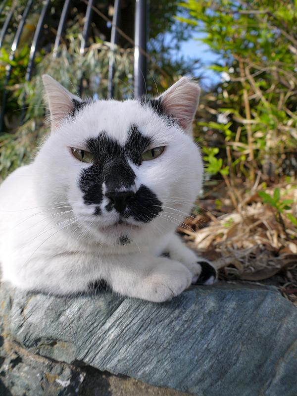 ユニーク柄の白黒猫3
