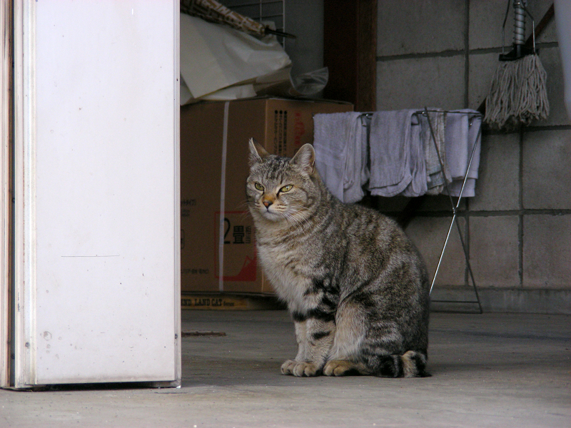 民家前の猫1