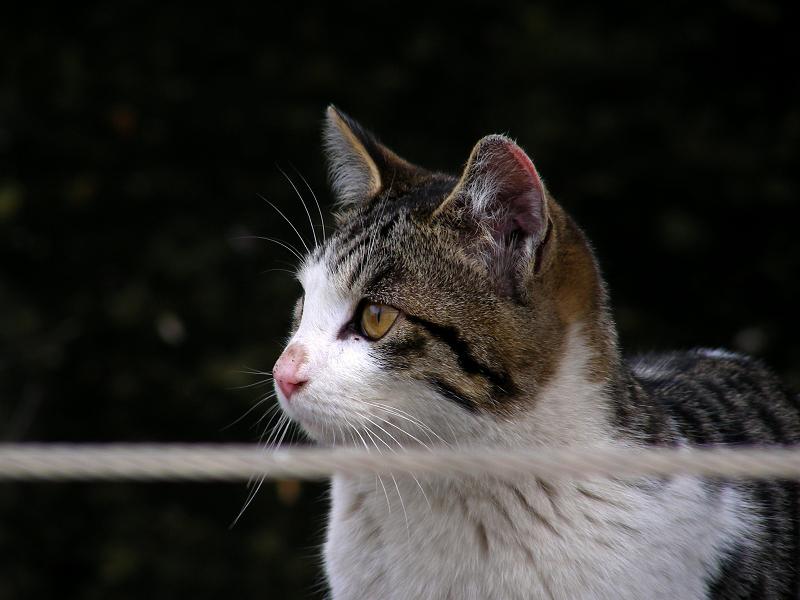 運河背景のキジ白猫2
