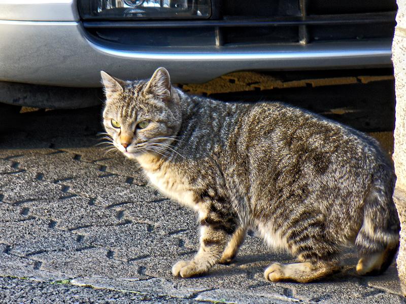 民家前の猫2