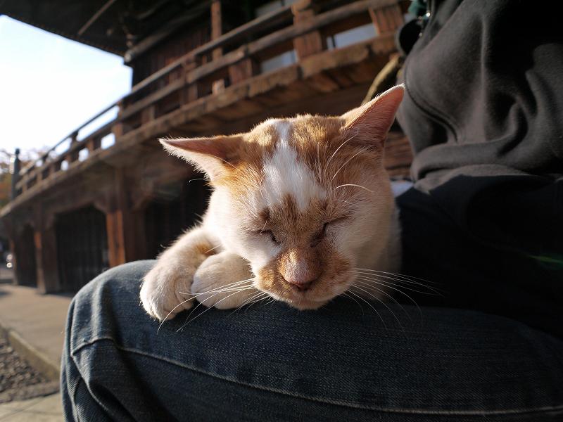 階段の白茶猫3
