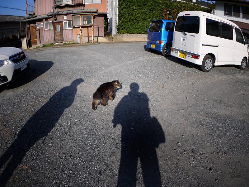 8年ぶり再会の黒毛長猫1