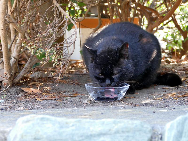 ガラス容器で水を飲んでる黒猫1